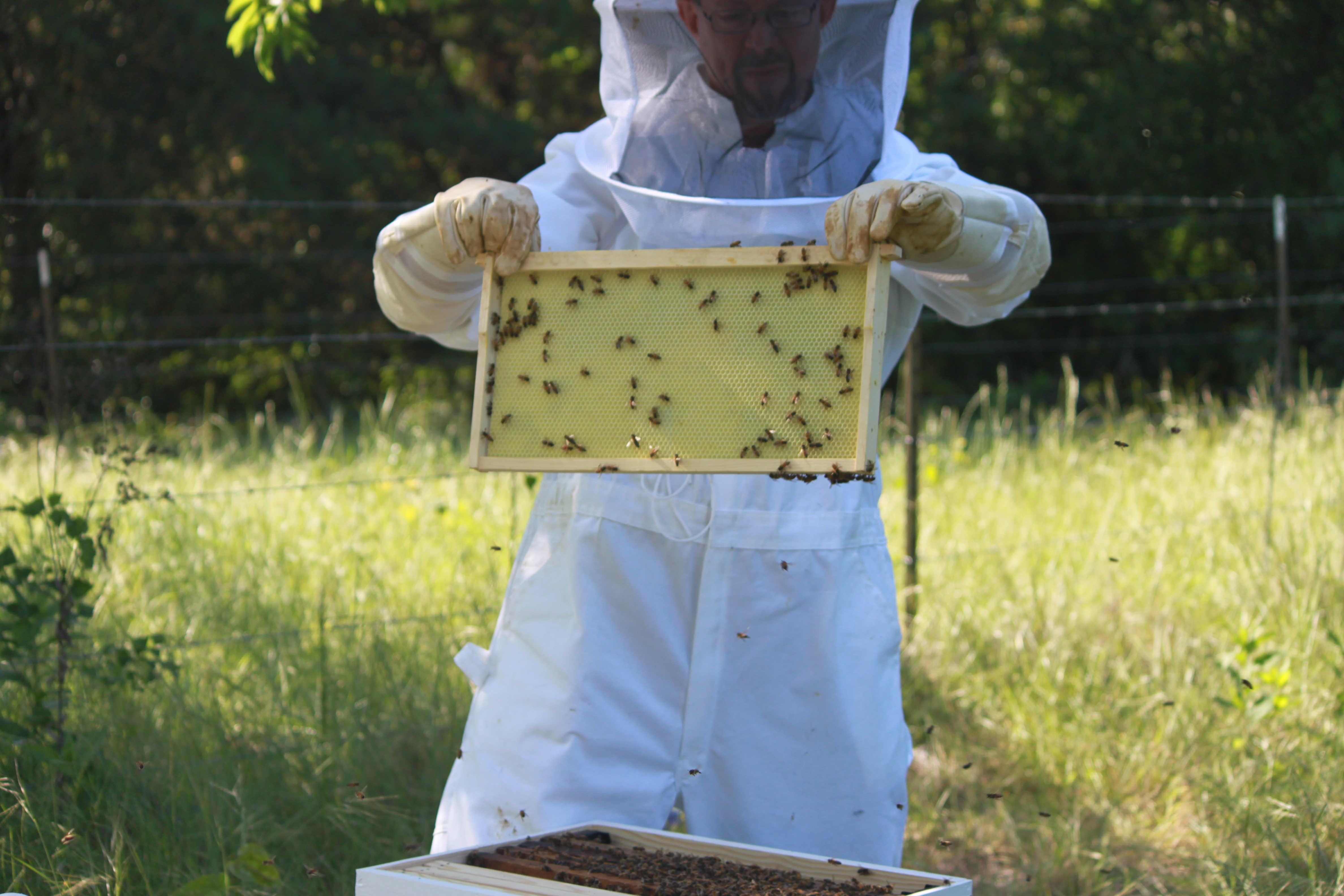 Image of Bees from alumni beekeepers